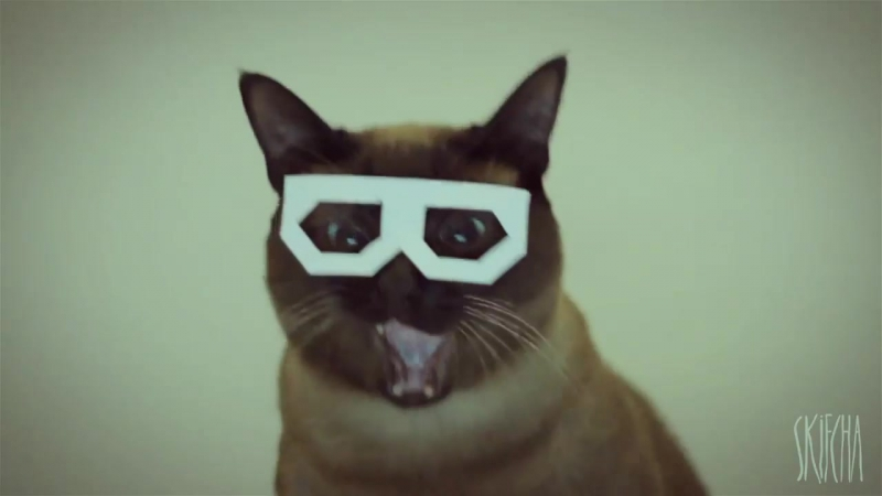Stereo skifcha _ dubstep cat [1 hour loop] (1)
