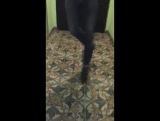 Татарстан супер Гуд