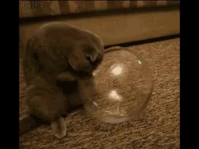 Liquid cat