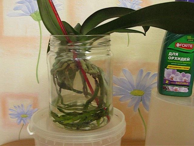 Как приготовить раствор для содержания орхидей в открытой системе