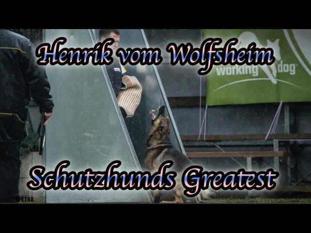 Schutzhunds Greatest Dogs *Henrik vom Wolfsheim*