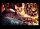 Смешная И Веселая Кошка Дуська 44 / СеменАлиса