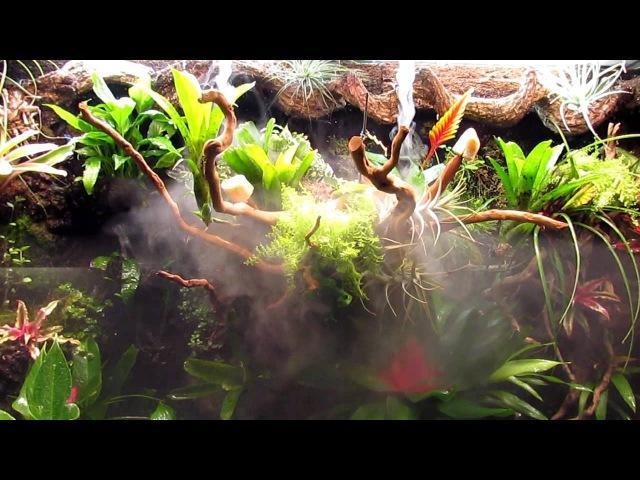 Paludarium Frog