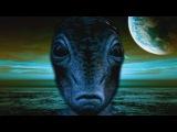 Киты и дельфины в галактике и на Земле