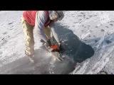 Две рыбы в странном положении замерзли во льду