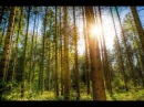Relaxation Music2017-Instrumental Music-Nature Sound and Birdsong-Relaxing Music,Stress Relief Music
