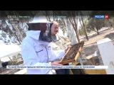 Новости на Россия 24  Сезон  Рош Ха-Шана что ставят на стол на еврейский Новый год