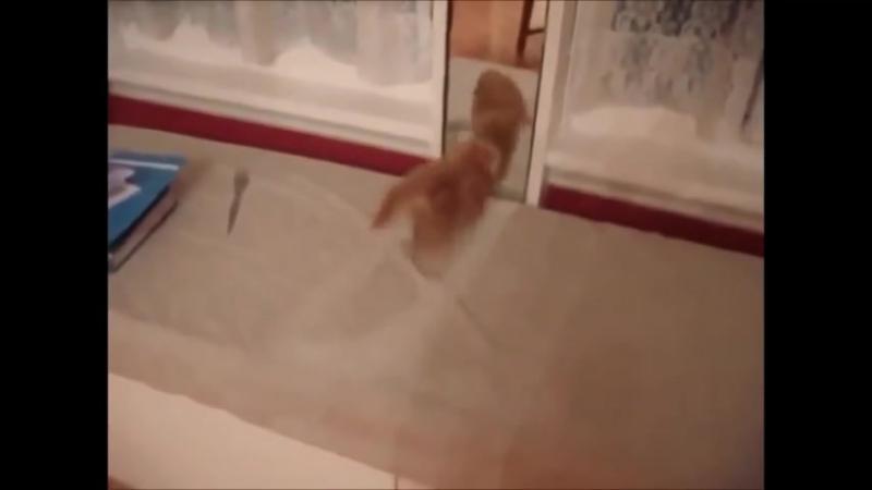 Смішні коти ( Смішне відео)