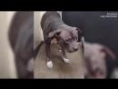 Собака впала в глубокую депрессию после того, как хозяева сдали ее в приют (VHS Video)
