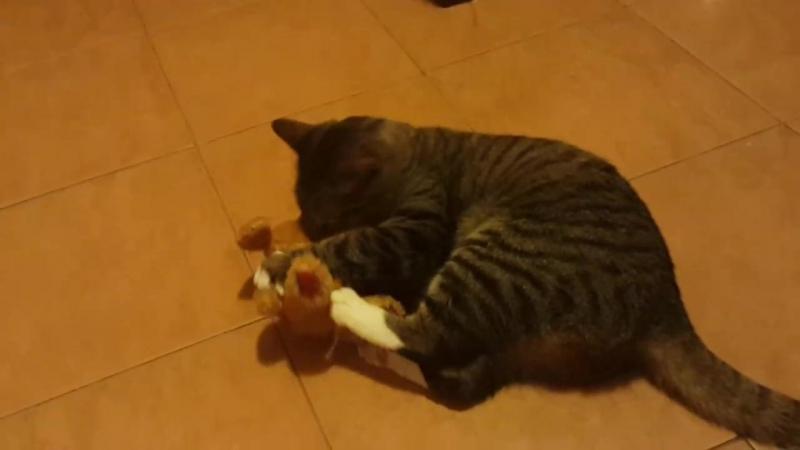 Наш кот в ударе :)