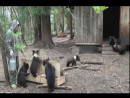 Центр спасения медведей в Тверской области.Медвежий угол.