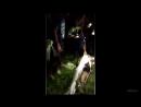 огромная змея поймала задушила и съела девушку