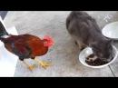 Бой кот и гусь кот и собака нарезка