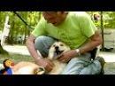 Он проехал полстраны, чтобы пёсик без задних лап получил семью и новые ножки... / О собаке, человеке, и не только...