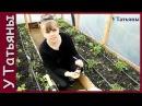 ПЕРЕКИСЬ ВОДОРОДА СУПЕР УДОБРЕНИЕ для растений