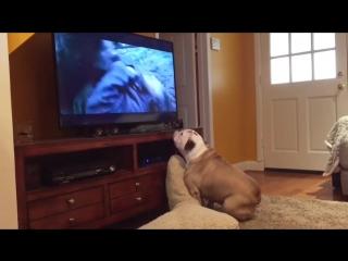 Собака переживает за актера