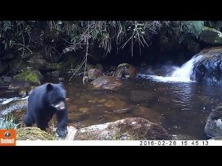 Трусливый очковый медвежонок прославился в сети