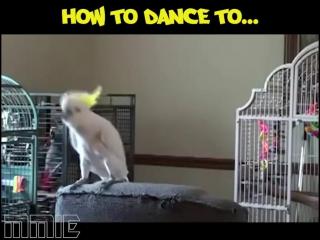 Попугайские уроки танцев