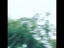 Хойники