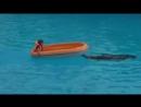 Дельфины, выступление в дельфинарии