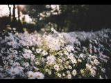 AK X LYNX ft. Veela - Virtual Paradise [fhzz' Insane]