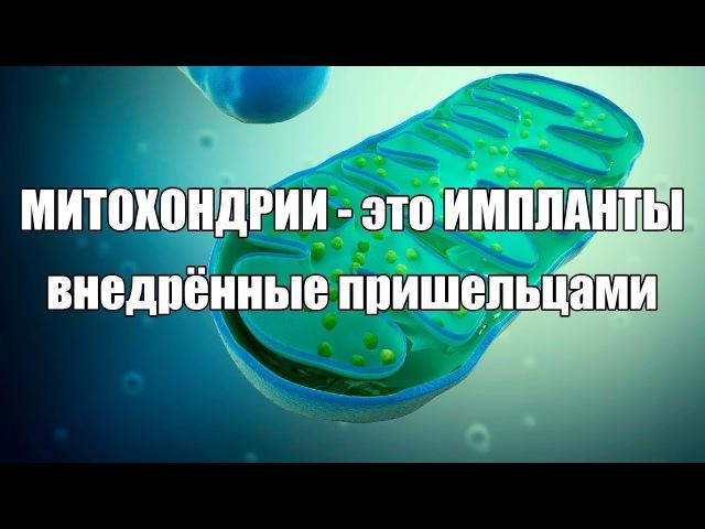 Митохондрии - это импланты, внедрённые пришельцами