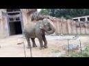 코끼리 elephant 大象 elefante فيل gajah 象