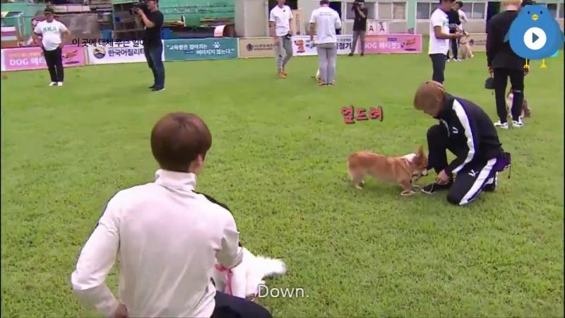 Tae shows jk