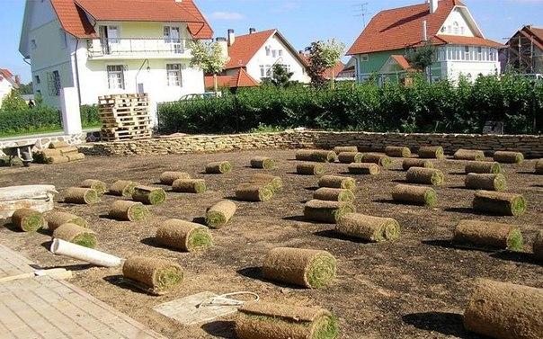 Бизнес-идея: продажа и укладка газона  Ландшафтный дизайн сегодня по