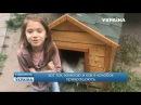 Девочка в будке Говорит Украина