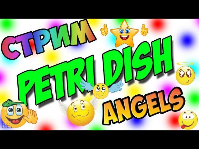 Petri Dish | AngelS | Стрим 22