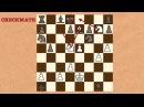 Число возможных шахматных партий RUS