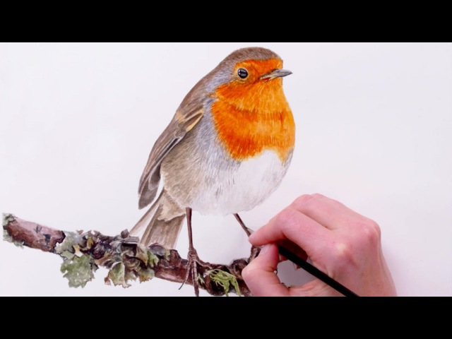How to paint detailed feathers on a Robin bird - with Anna Mason