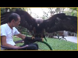 Most Unusual Pets Ever
