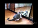 Прикольные животные. Коты и зеркало. Забавное видео про котов