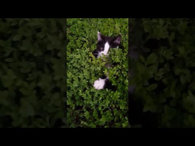 Peek-a-Boo Bush of Kittens || ViralHog