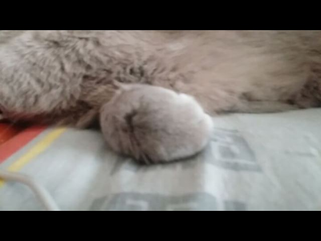 Bugs_bunny0605 video