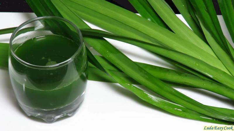 Натуральный Зеленый ПИЩЕВОЙ краситель из листьев пандана - natural food coloring pandan leaf