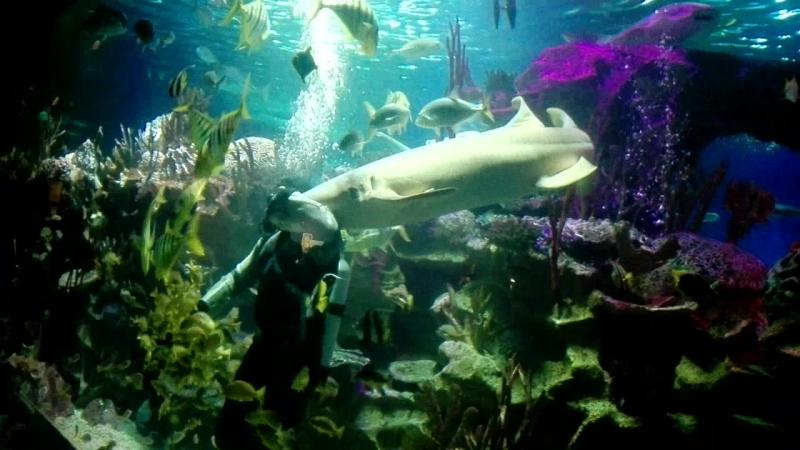 ОКЕАНАРИУМ«Шоу с акулами»