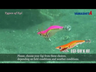 How to catch SQUID, EGING (SQUID Fishing) from shore All technic and colour explained #yamashita #yamaria #maria #Pilotspb