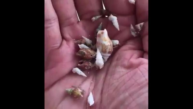 морской народец naturaleza