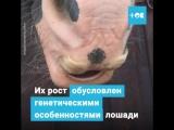 Лошадь с усами
