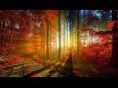Пение вечернего леса Голоса природы на закате в лесу / Singing evening forest sounds of nature