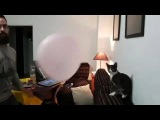 Play with cat with balloon