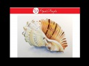 How to paint a Seashell using Watercolors - Time Lapse Video