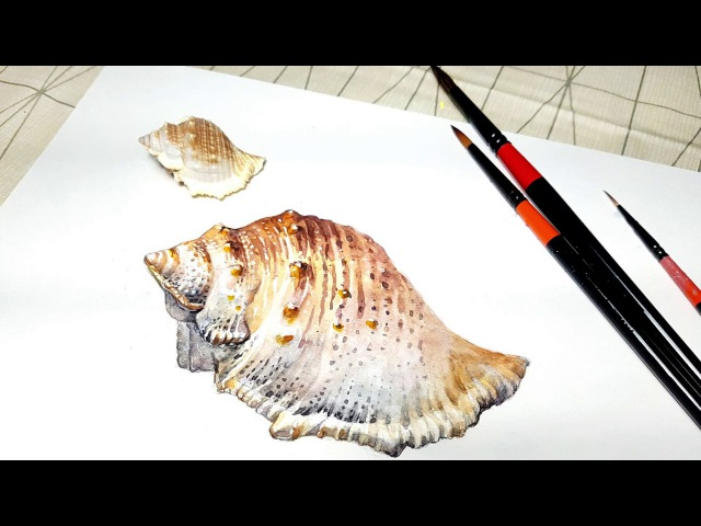 정물수채화 예쁜 조개 그림그리기 How to paint a realistic shell in watercolor by junghye