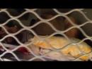 ТюрьмаБелый лебедь Студия Шура шансон 2016 новинки клипы.mp4