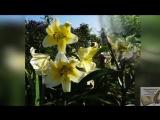Прогулки по саду. Виртуальная экскурсия по саду мэтра хирургии А. С. Несмеяна