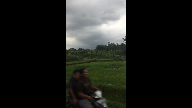 Bali 🌴🍍