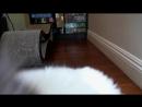 Котя мурлыкает